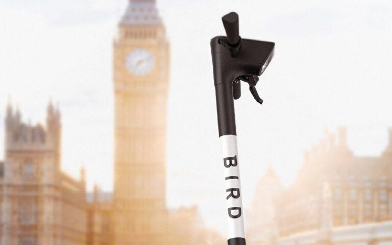Bird in London